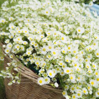 たくさんのお花 - No.751602