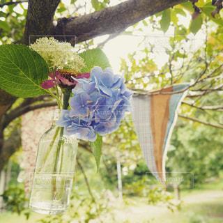 木の枝に花の花瓶の写真・画像素材[751607]