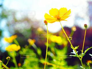 近くの花のアップの写真・画像素材[1589782]