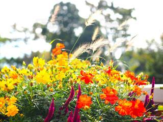 秋の草花の写真・画像素材[1589786]