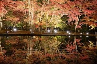 紅葉ライトアップの写真・画像素材[2763115]