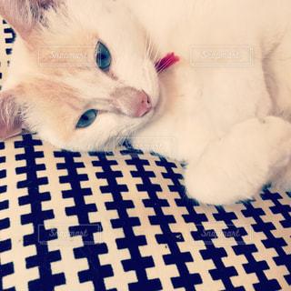 ベッドの上で横になっている猫の写真・画像素材[751687]