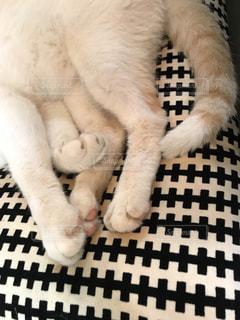 白い背景の上に横たわる猫の写真・画像素材[751695]