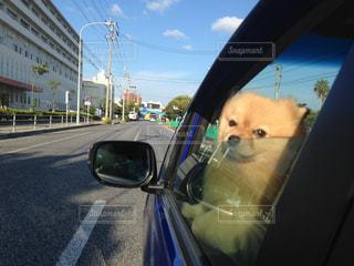 車の窓の外見ている犬 - No.778115