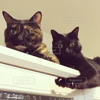 サビ猫と黒猫の写真・画像素材[751811]