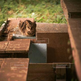ベンチに座ってる野良猫の写真・画像素材[751816]