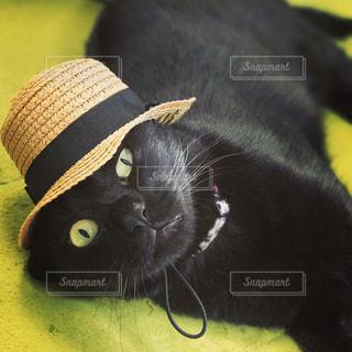 麦わら帽子をかぶる黒猫の写真・画像素材[751817]