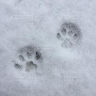 雪についた肉球のあと - No.766569