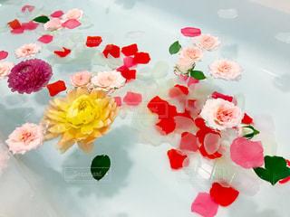 お花を浮かべた水面の写真・画像素材[798374]