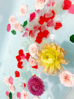 水面に浮かぶ花の写真・画像素材[798376]