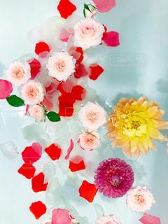 水面に浮かぶ花の写真・画像素材[798378]