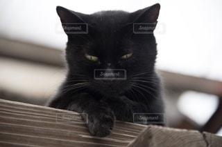 黒猫の写真・画像素材[2674672]