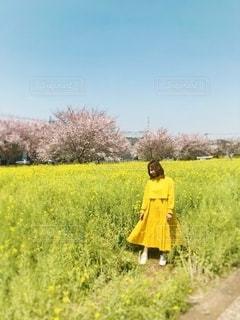 菜の花と私の写真・画像素材[2030588]