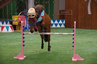 馬の上に犬の地位 - No.772589