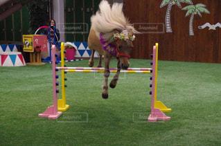 バーを飛ぶ馬 - No.772590