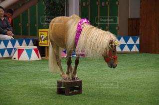 台に乗る馬 - No.772591