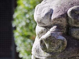 境内の狛犬の写真・画像素材[753855]