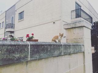 建物と歩いている猫の写真・画像素材[752554]
