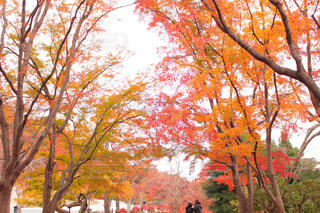 大きな木の写真・画像素材[885693]