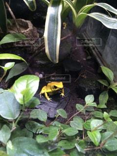 鮮やかなカエルの写真・画像素材[757116]