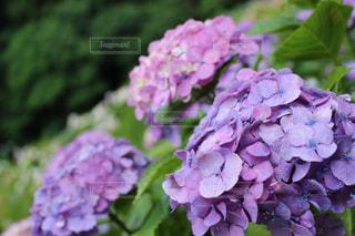 近くの花のアップ - No.784008