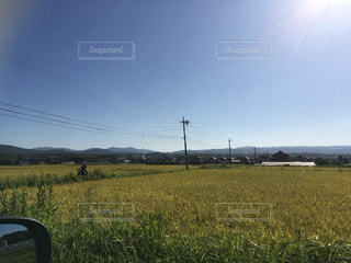 背景の木と大規模なグリーン フィールドの写真・画像素材[753024]