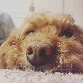 犬の写真・画像素材[11685]