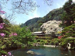箱根の春 - No.759747