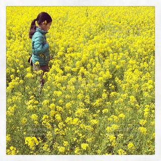 菜の花畑 - No.780967