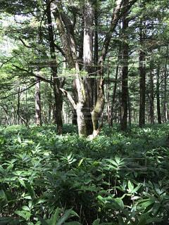 緑豊かな森の真ん中の木の写真・画像素材[753917]