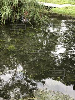 木々 に囲まれた水の体 - No.754431