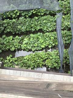 庭のベンチの写真・画像素材[754436]
