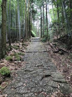 森の中の木 - No.755434