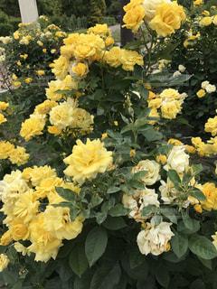 近くに黄色い花のアップ - No.755477