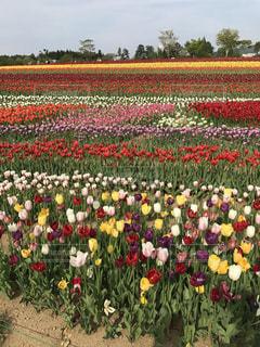 フィールドのカラフルな花のグループ - No.755502
