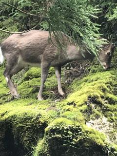 森の中の草を食べる羊のグループ - No.755562
