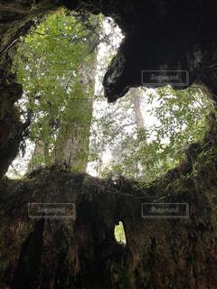森の大きな木 - No.755572