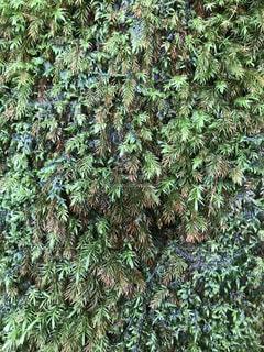 森の中の緑の植物 - No.755581
