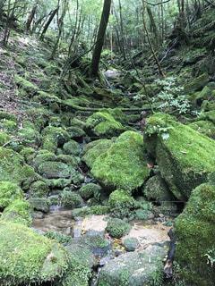 森の中の緑の植物 - No.755586