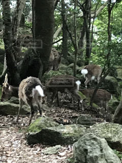 森の横に立ってを羊のグループ - No.755588