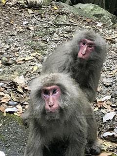 岩の上に座っている猿 - No.755589