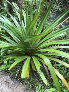 近くの緑の植物を - No.755591