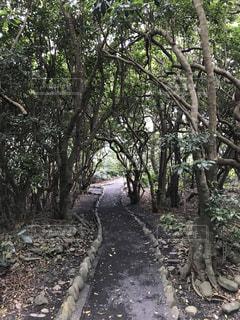 フォレスト内のツリー - No.755607