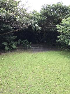 背景の木と大規模なグリーン フィールド - No.755608