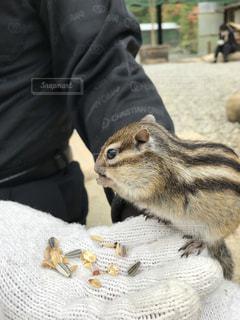 動物を保持しているリスの写真・画像素材[797164]
