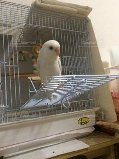 鳥の写真・画像素材[395972]