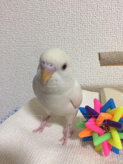 動物の写真・画像素材[408422]