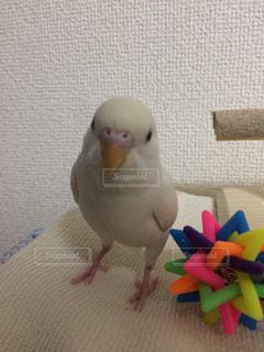 動物の写真・画像素材[408424]