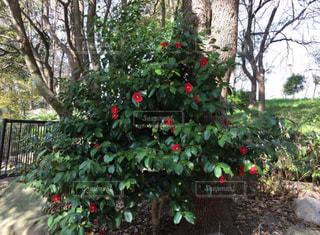 庭の木の写真・画像素材[1691882]