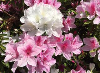 近くの花のアップの写真・画像素材[1691886]